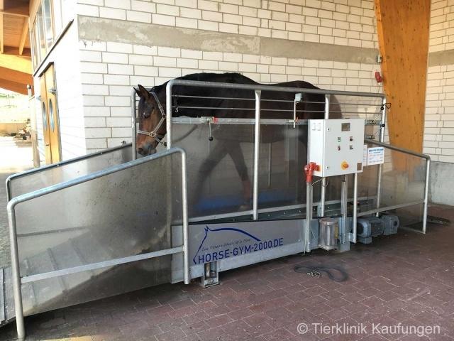 Pferd auf dem Laufband Horse Gym 2000