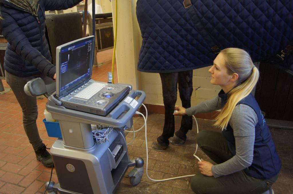 Ultraschall der Sehnen eines Pferdes