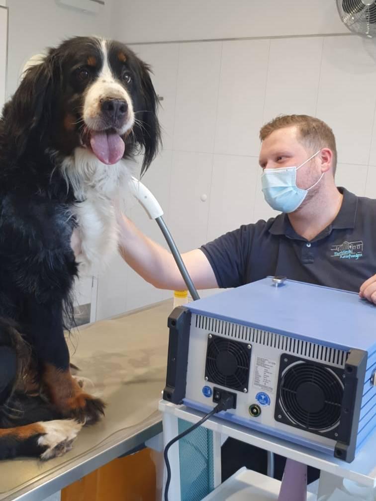 Stoßwellentherapie Hund